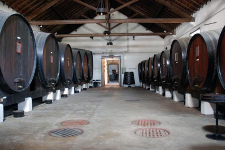 Alcobaça Wine Museum